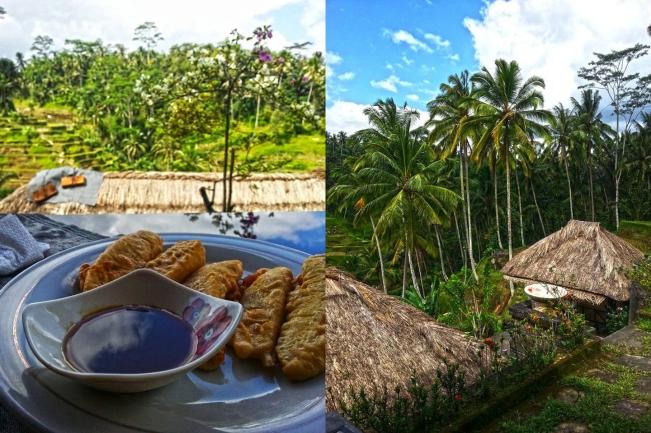 Ubud - Rice paddies view 2